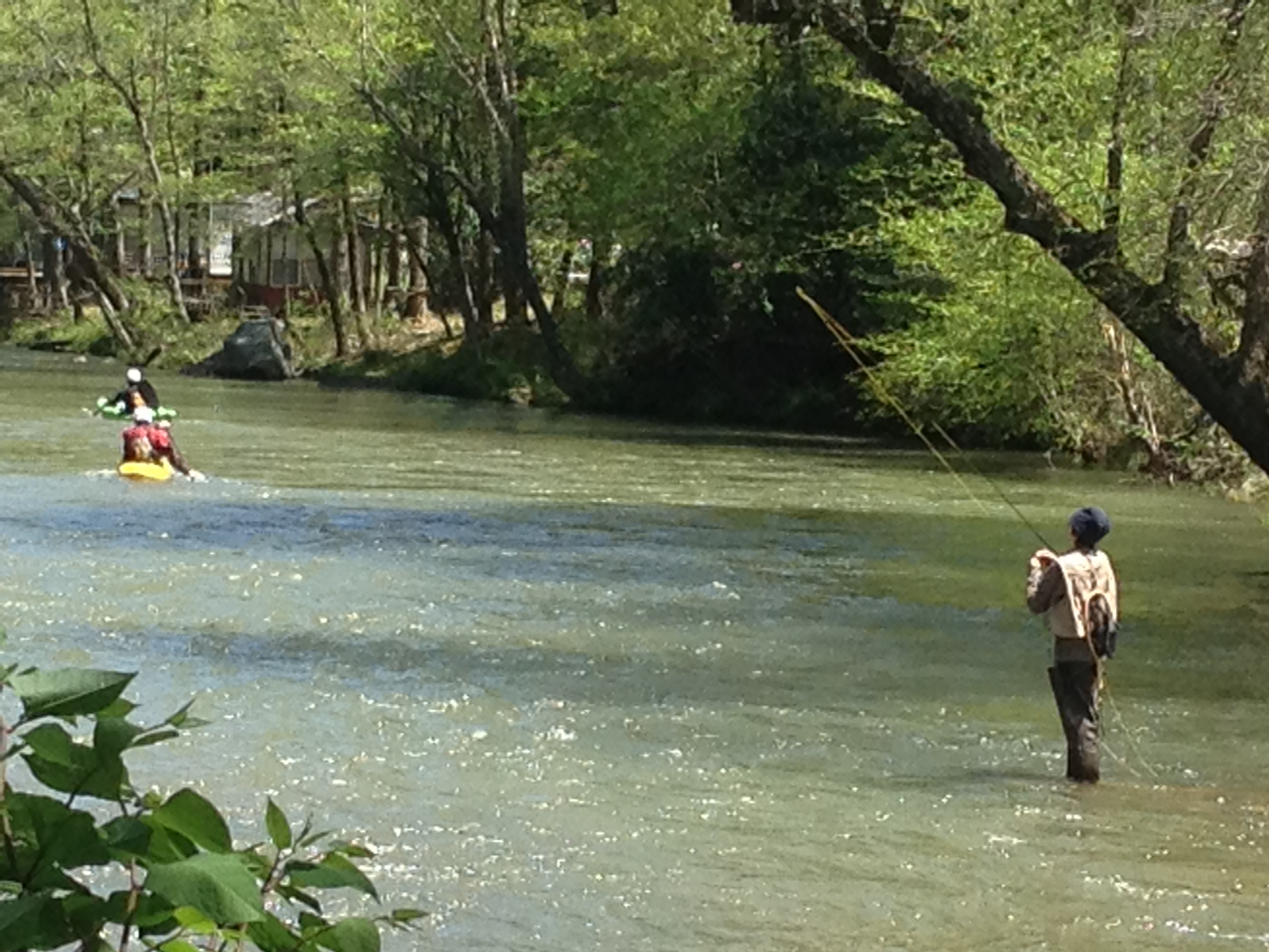 Fly fishing the green river cabin fever for New river nc fishing